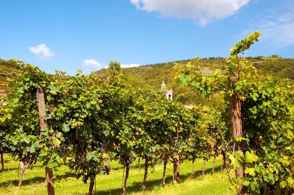 Corte Aleardi vineyard