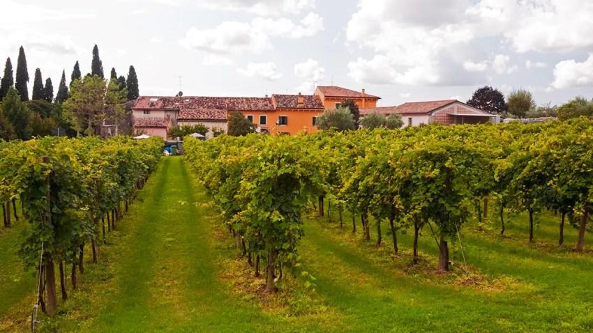 Corte Aleardi vineyard, Gargagnago, Italy