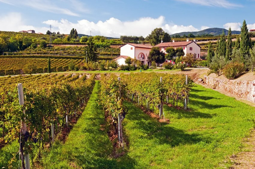 Rubinelli Vajol vineyard, near San Pietro in Cariano, Italy