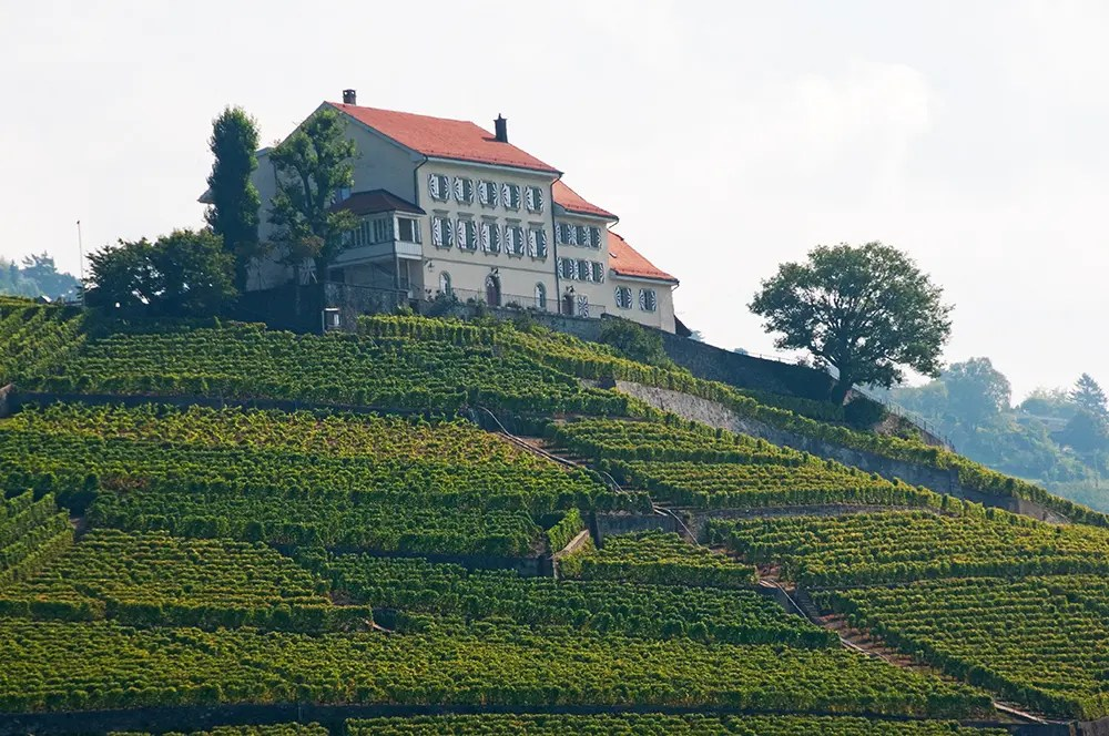 House and vineyards near Lutry
