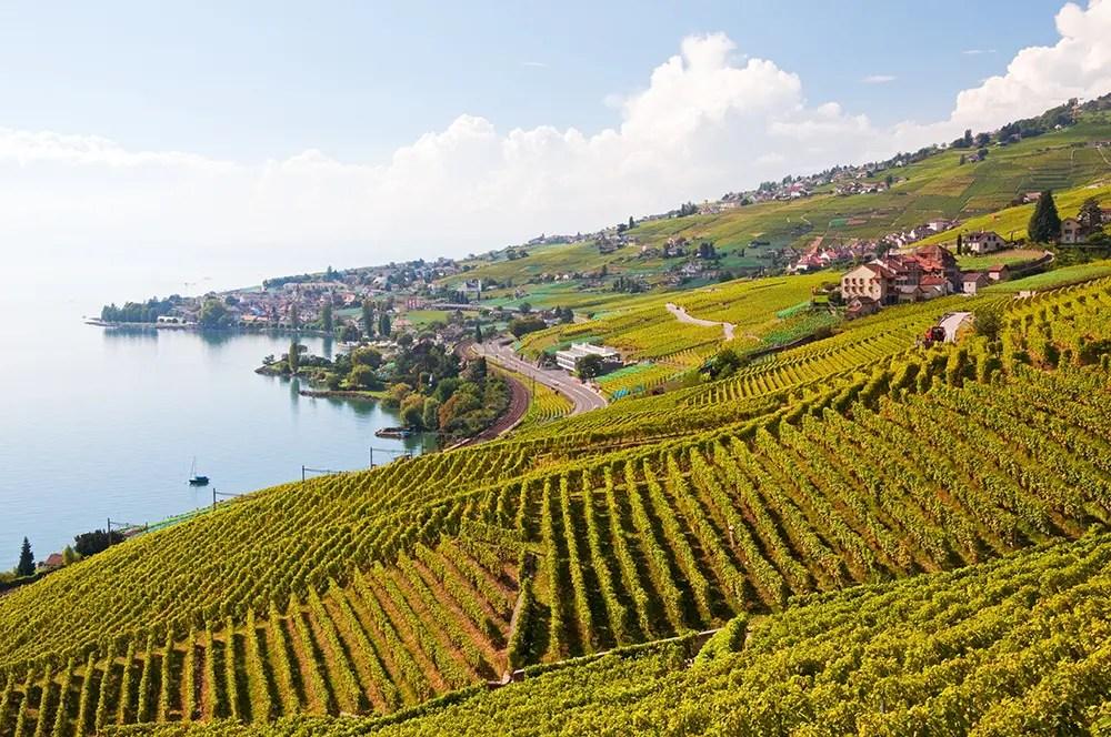 Vineyards along Terrasses de Lavaux trail