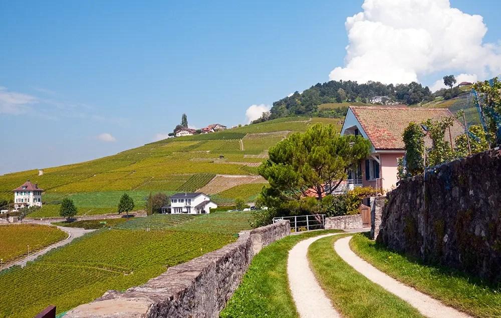 Scenes from the Terrasses de Lavaux trail
