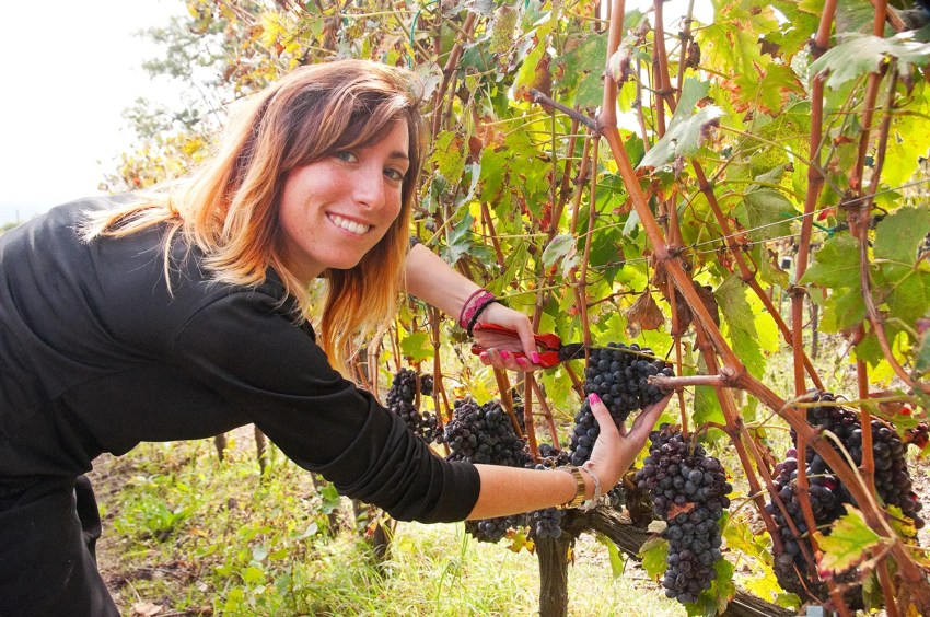 Pricilla, working the vines at Sante Marie di Vignoni near Bagno Vignoni, Italy