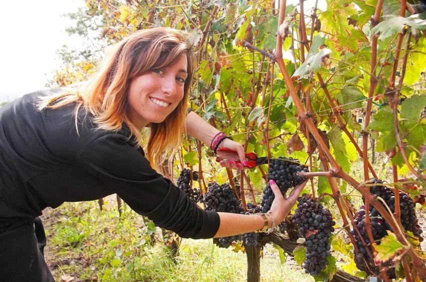 Pricilla, working the vines at Sante Marie di Vignoni near Bagno Vignoni, Italy