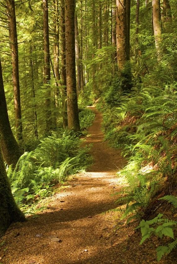 Siuslaw National Forest, Cape Perpetua, central coast of Oregon
