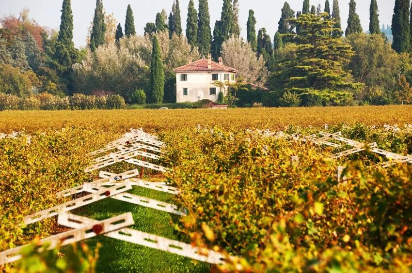 Vineyard in autumn in the Valpolicella wine region near the town of San Pietro in Cariano, Italy