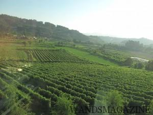 Villa de Rixaに広かる畑