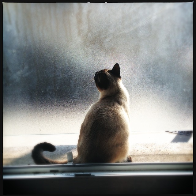adapter chatière fenêtre