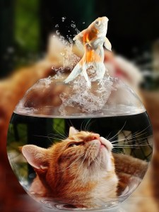 chat poisson rouge bocal
