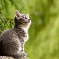 Comment habituer un chat à une nouvelle maison
