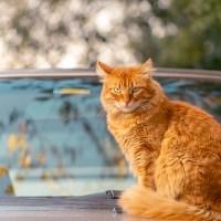 Comment voyager en voiture avec son chat : Se préparer, Anticiper et être au top