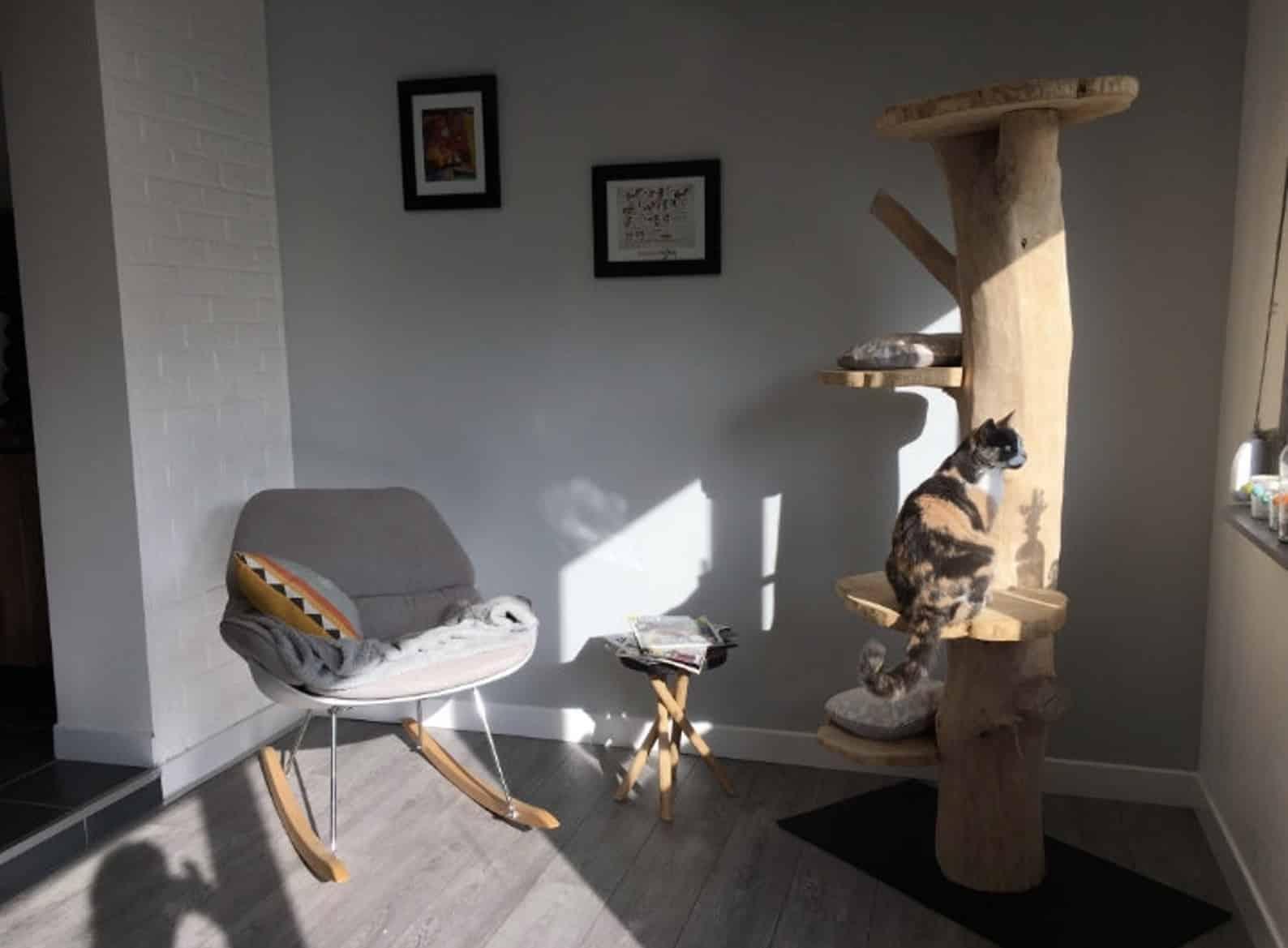 arbre a chat français bois flotté