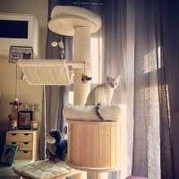 Arbre à chat design en bois (vraiment) clair