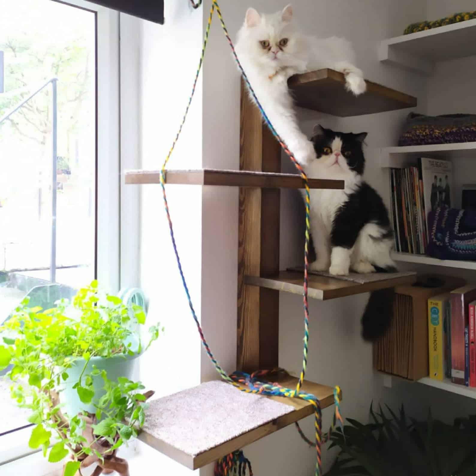 arbre a chat mural design droit 4 niveaux