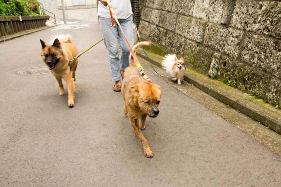 リカちゃん散歩