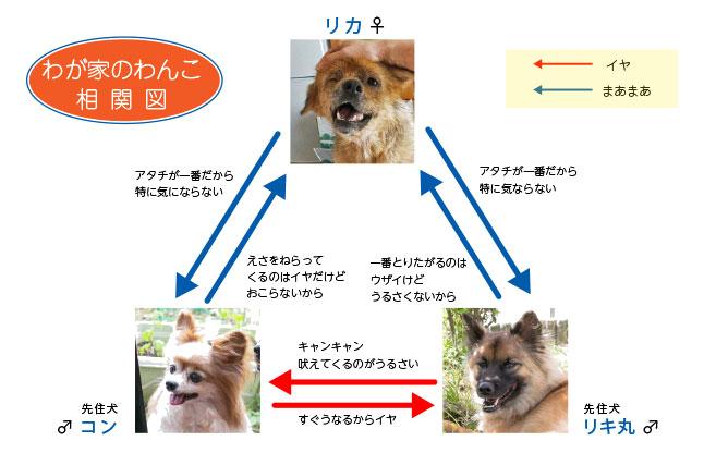 リカちゃん リキ丸 コン 相関図