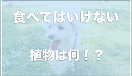 犬が食べてはいけない植物と草は何?犬に安全な植物もチェック!