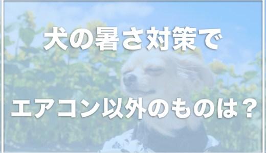 【犬の夏の暑さ対策】エアコン以外の方法はある?ペットボトルや服で涼しくする方法をチェック!