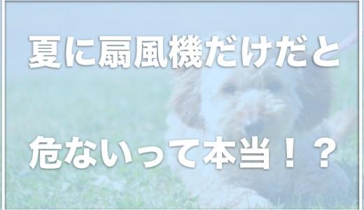 【犬を涼しくする方法】扇風機だけだと危ないし意味がない!?エアコンは必要か調査!