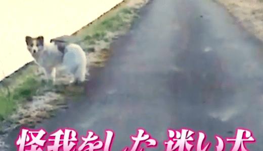 青森県の放浪犬ちくわちゃんの現在は?自然溢れるドッグランで幸せに暮らしている?