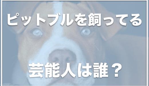 ピットブルを飼ってる芸能人は誰?日本で飼うには許可がいる?事故でチワワが死亡したことも!