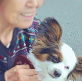 老後のおばあちゃんと犬