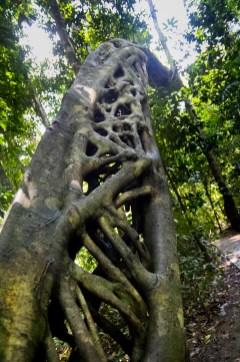 jungle boardwalks-13
