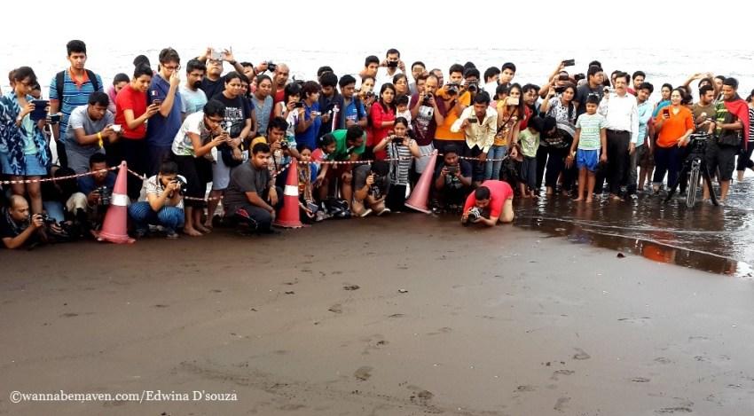 velas Turtle festival-velas beach-konkan
