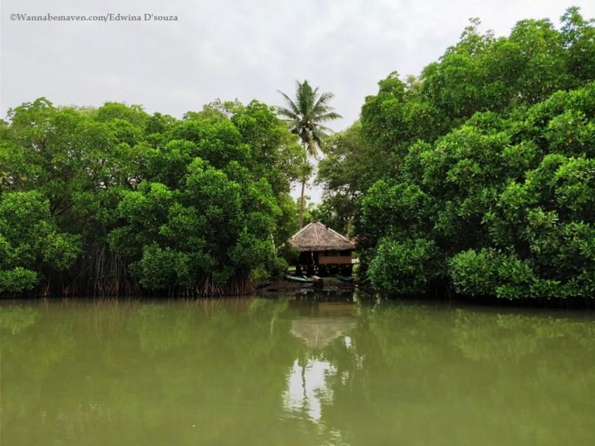 accommodation Sri Lanka-rekawa lagoon-catamaran lagoon house