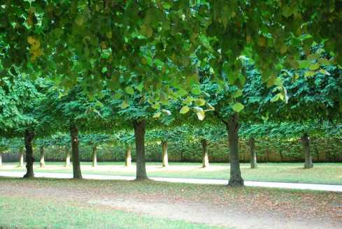 Versailles_jardins_arbres138