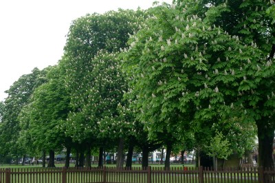 Christchurch Green