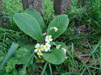 primrose wanstead place1