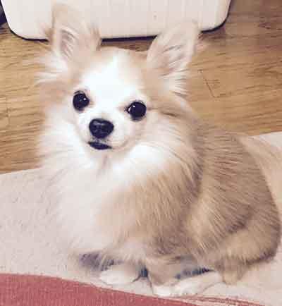 小型犬おすわり