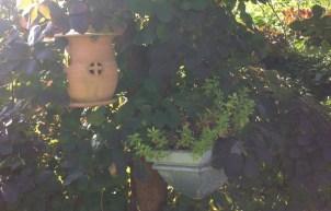 Potter i busken