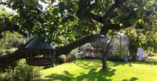 Æbletræ med detaljer