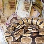 Money swallowing snake