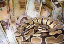 Money swallowing snake