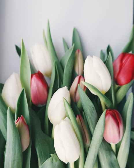 arrangement bloom blooming blossom