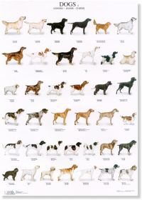 Dogs Poster #4