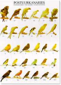 Type Canaries Poster