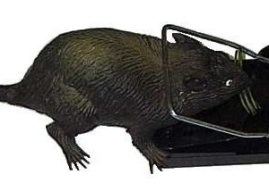 Snap-E Rat Trap