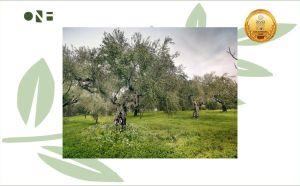 One & Olive Olijfolie 1