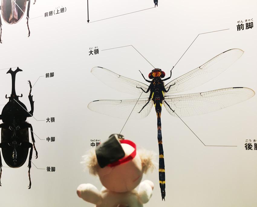上野で昆活してきました!