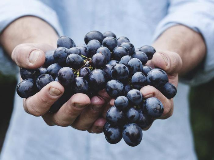 Grapes, generic_resources1-large