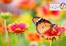 ناشکری سے بچے، اللہ نے بہت کچھ دیا ہے! بقلم: حنا خان(آکولہ)