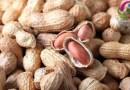مونگ پھلی کے حیرت انگیز فوائد جانیے