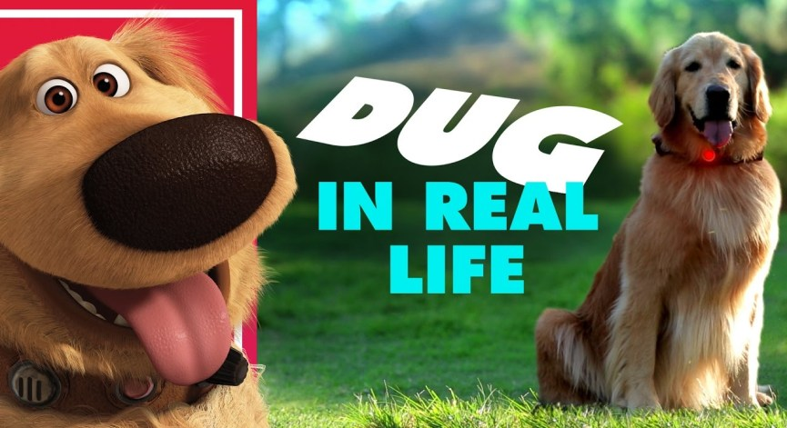 Random Video: Disney/Pixar's Dug In Real Life