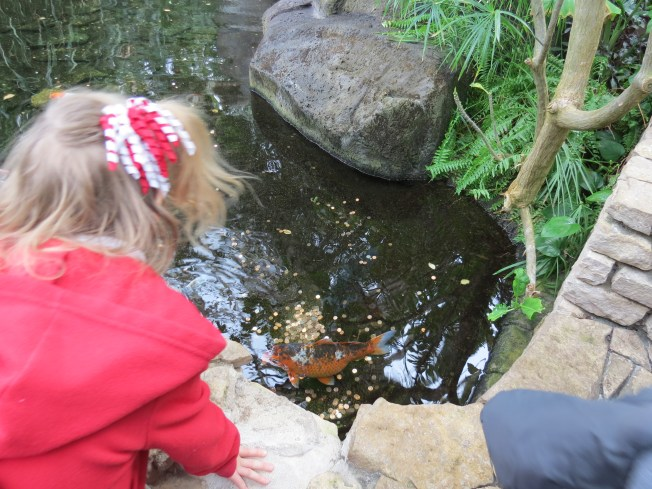 Katya liked the Koi-pond. I explained to her that they were like her gold-fish at home, only bigger.