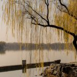 166. The Willows