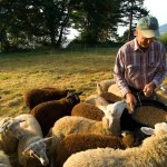 The Reformation restored shepherds to the sheepfold